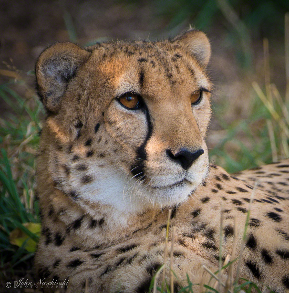Denver Zoo Free Days: Photos From Denver Zoo