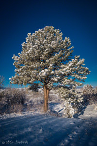 Castle Rock Colorado Winter Photo 50
