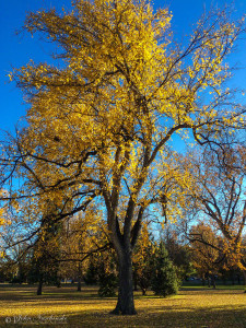 Tree with Fall Colors at Denver City Park