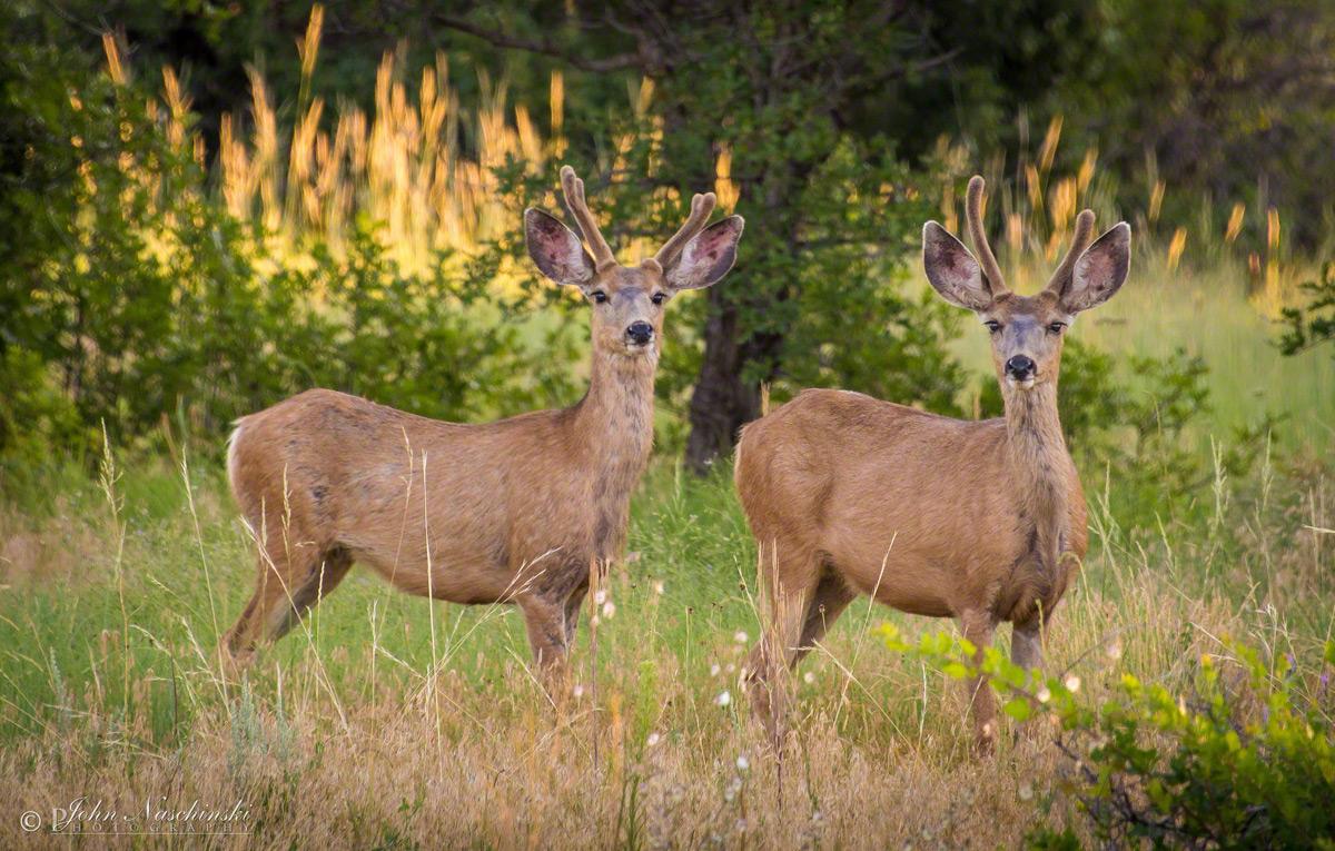Aspen To Denver >> Castle Rock Colorado Mule Deer Photos