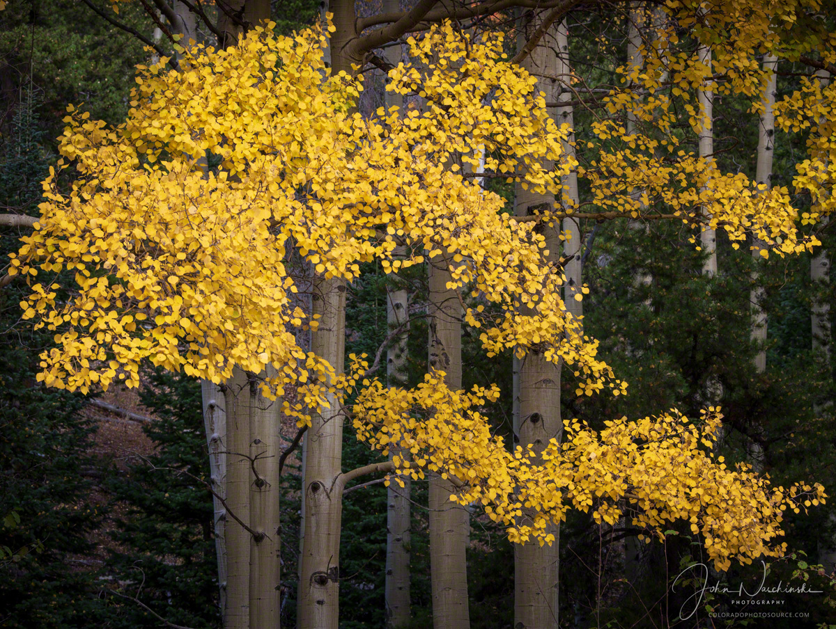 Photos Of Rocky Mountain National Park Colorado Fall Colors